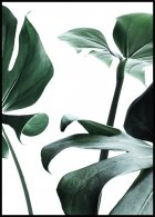Plakat Monstera no.1