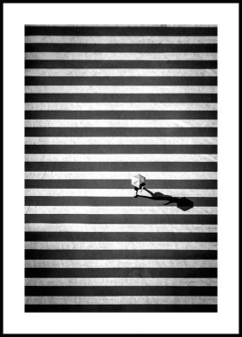 Plakat Crossing Stripes