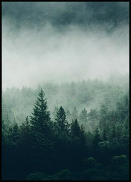 Plakat Tree Top Fog